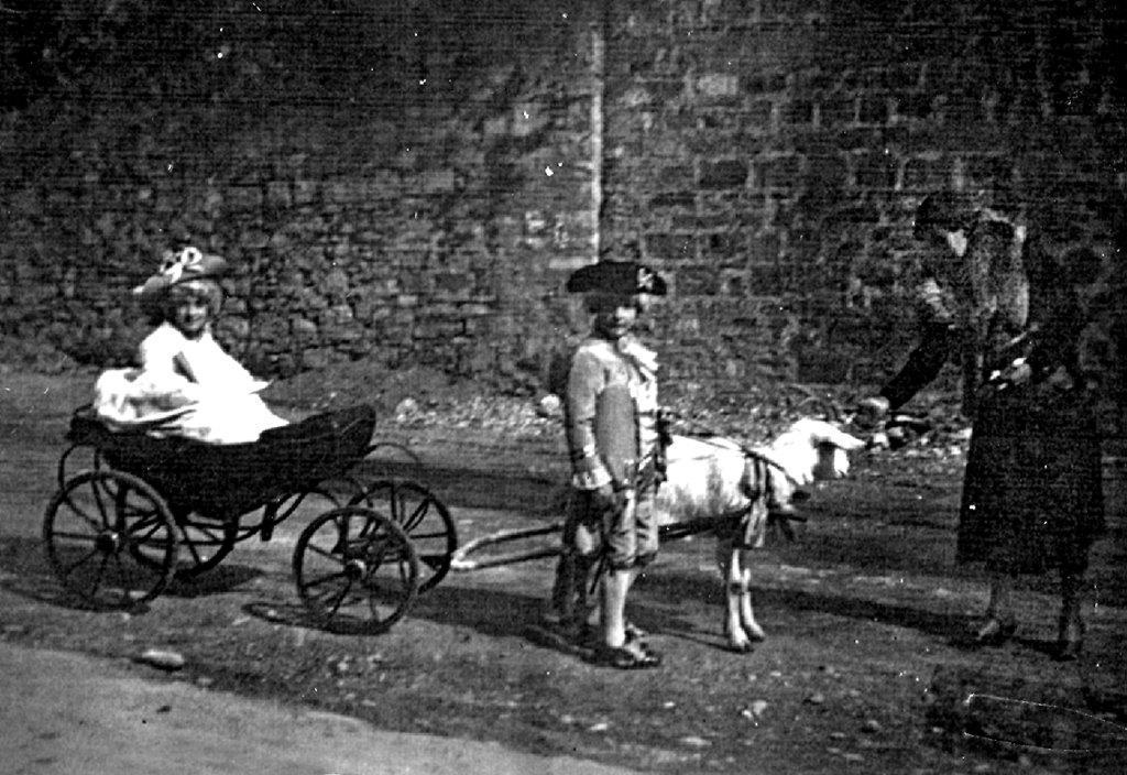 Caval marquis 1